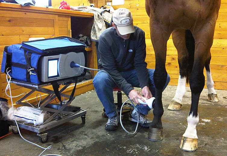 Equine Sports Medicine Shockwave Therapy Manning Equine Vet Services serving Erin, Halton Hills, Georgetown, Orangeville, Caledon, Rockwood and Southern Ontario areas.